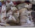 triscele cassetta pesci mista.jpg